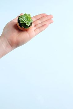 How to make a DIY Eggshell Succulent Garden - Eclectic Creative