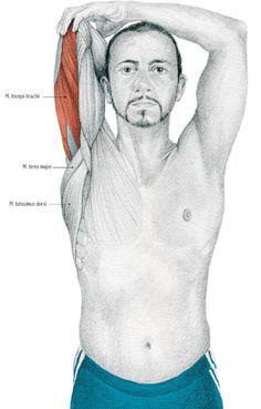 . Yoga Anatomy, Group Work, Muscle Groups, Yoga Meditation, Asana, Feelings, Teamwork