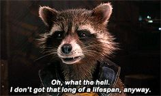 """How's it goin', ya blue idiot? — """"What, so he can turn you into a frickin' chair? Cute Raccoon, Rocket Raccoon, James Gunn, Good Good Father, Marvel Memes, Avengers Infinity War, Guardians Of The Galaxy, Marvel Cinematic Universe, I Movie"""