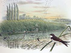 John Gould Birds of Great Britain 1862-1873