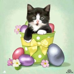 Páscoa Kittens Cutest, Cats And Kittens, Les Enfants Sages, Easter Cats, Happy Easter, Kitten Images, Gatos Cats, Pretty Cats, Halloween Cat