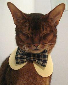 lookit, @Viv Voyles! School uniform collar and bow tie set for cat by CatAtelier, $25.00