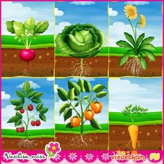 Картинки для оформления экологического уголка Fruit And Veg, Fruits And Veggies, Olivers Vegetables, Art For Kids, Crafts For Kids, Little Einsteins, Plant Science, Kids Nutrition, Colouring Pages