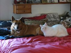 All my animals have rescued me. These two are my current babies. The dog, Cimarron, rescued me 10 years ago, literally put her paws on my ...
