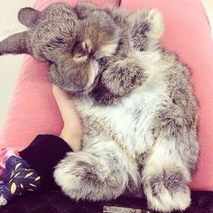 Bunny. Ahhh, what kind of bunny is this?! I need to know! @Syndi Bell