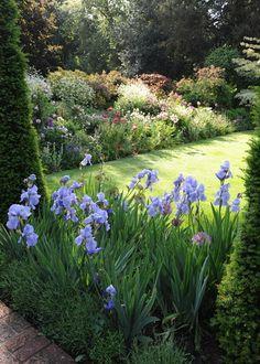 .Prachtige blauwe irissen die goed uitkomen bij het gazon