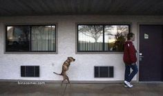 amazing dog and his story http://www.binscorner.com/pages/a/about-a-dog-called-faith.html