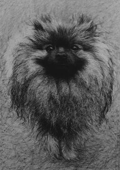Charlie 2014 Graphite on paper by I DRAW DOGS FOR MONEY