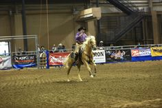 AQHA Stallion Colonel Leo Creme, Cowboy Mounted Shooting, 2013 CMSA Nationals, Tunica, MS