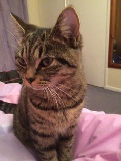 Smirnoff Cat | Pawshake