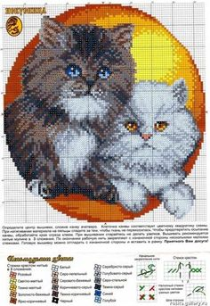 Persian cats (bbj2300) 1/1