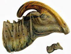 Parasaurolophus adult & juvenile, Lukas Panzarin