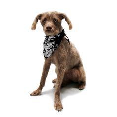"Vikki Salmela ""My Garden"" Pet Bandana | KESS InHouse #new #ASPCA #deco #modern #Gatsby #nouveau #garden #flower #black #white #art for #dog #bandanna #scarves #puppy #home #travel #gift by #vikkisalmela #polkadotstudio on #KessinHouse."