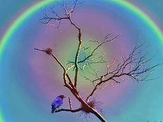 alo solar, hermosa impresion de relucientes  colores