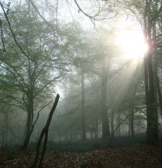 la lumière et la forêt