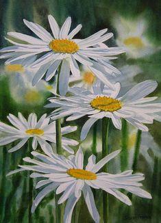 Daisy Painting, Garden Painting, Garden Art, Painting & Drawing, Daisy Drawing, Margaritas Shasta, Watercolor Flowers, Watercolor Paintings, Watercolors