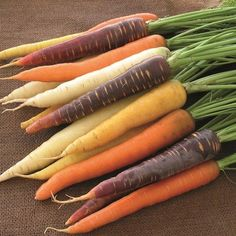 Exclusive – Our mix of great tasting, early maturing carrots in a kaleidoscope of fun colors: orange, yellow, white and purple. Each color tastes subtly different and all are first-rate for eating and juicing. Row Covers, Sweet Butter, Grow Your Own Food, Garden Seeds, Fruits And Vegetables, Veggies, Bunt, Carrots, Herbs