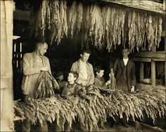 Stripping Tobacco in Bowling Green, Kentucky, ca. A Fine-art Photographic Print from the Library of Congress Collection.