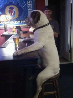 The 51 Greatest Pictures of Animals Sitting Like People