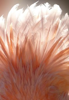 Feathered Light by Leah McCoy Soderblom