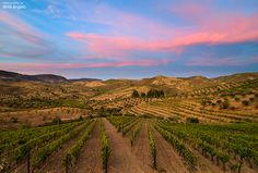 Vinhas near Foz Coa, Porto and North Region, Portugal by Dinis Ângelo, via 500px