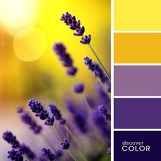 68 ideas for wall color palette paint colours shades Color Schemes Colour Palettes, Colour Pallette, Color Palate, Color Combos, Yellow Color Schemes, Purple Palette, Best Colour Combinations, Summer Colour Palette, Lavender Color Scheme