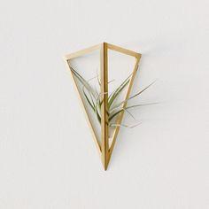 flax single.jpg