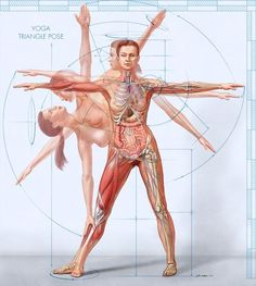 Researchers report that a single, session of Hatha yoga improves memory Loved and pinned by www. Yoga 1, Yoga Meditation, Yoga Hatha, Corps Yoga, Yoga Anatomy, Wellness, Muscular, Yoga Benefits, Yoga Inspiration