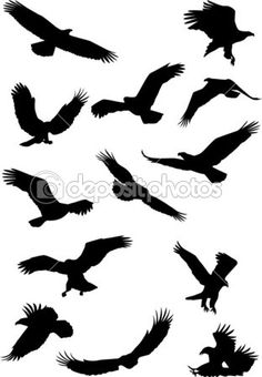 Eagle silhouette collection — Stock Illustration #5490090