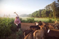 """""""Rotational Grazing for Pastured Livestock"""" The secret to forage management is to keep your critters moving. Follow these rotation grazing guidelines by Joel Salatin for your pastured livestock. From MOTHER EARTH NEWS"""