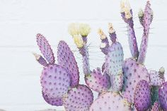 Find out where to stay, what to eat and all of the best places to shop in Joshua Tree, California. Details and resource links this way.