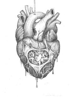 human heart drawing human heart drawing