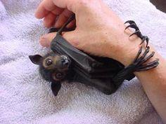 Orphaned bat at Tolga Bat Hospital in Australia.