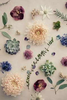 Beautiful Flower Ideas for Phone Wallpapers 5 Flowery Wallpaper, Flower Background Wallpaper, Flower Phone Wallpaper, Plant Wallpaper, Flower Backgrounds, Pattern Wallpaper, Iphone Wallpaper, Flower Aesthetic, Pretty Wallpapers