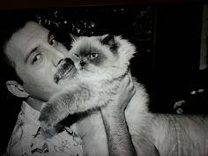 Freddie Mercury un amante de los gatos   Entretenimiento