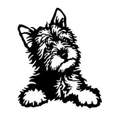 WHAT'S IN THE BOX 1 waterproof yorkshire terrier car decal. DESIGN 2 color options to choose from: white and black (colors may vary). NOTE: White may appear silver- shines white at night because it's Car Stickers, Car Decals, Vinyl Decals, Auto Styling, Socializing Dogs, Dog Car Seats, Yorkie Dogs, Dog Silhouette, Metal Wall Art