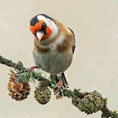 Bird, Photography, Animals, Instagram, Photograph, Animales, Animaux, Birds, Fotografie