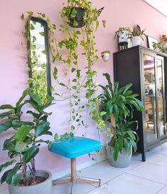 """51 curtidas, 3 comentários - Stephani Demczuk (@stephanidemczuk) no Instagram: """"E eu sigo tentando não matar meu projeto de #urbanjungle"""" Plants, Instagram, Projects, Plant, Planting, Planets"""