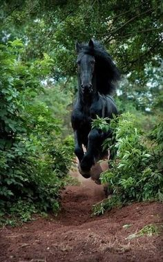 Friesian Thundering Down a Path. : Friesian Thundering Down a Path. All The Pretty Horses, Beautiful Horses, Animals Beautiful, Cute Animals, Simply Beautiful, Black Horses, Wild Horses, Horse Photos, Horse Pictures