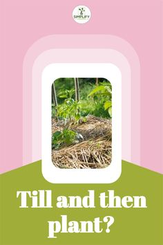 You should wait until it stops forming large clumps and is slightly dry before planting. // Tilling Tools // Gardening // Growing Crops // ##tipsontilling #tillageplanting #tillage Types Of Plants, All Plants, Vegetable Garden Soil, Agricultural Practices, Soil Layers, Soil Improvement, Organic Soil, Weed Seeds, Top Soil