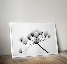Flower nature photography black and white art photography