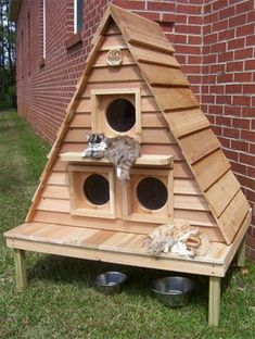 Feral Cat Home Designs on fast cat home, dog cat home, mountain lion home, stray cat home, lizard home, squirrel home, pig cat home, pet cat home, cat lady home, chipmunk home, ferret home, duck home,