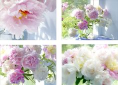 Peony Flower Still Life Photography Print Set. Offered here are four photographs of my favorite flowers, lush, voluptuous peonies. Each bloom is a bouquet in itself and in mass they are almost too beautiful to bear. Here they are drenched in sunlight, adding the warmth of summer to any season. Sizes: 5 x 7, 7 x 10 (photo 1) 8 x 10, 11 x 14 (photo 2) 4 x 6, 6 x 9, 12 x 18 (photo 3) The photographs can be hung together or given separately as special gifts. I use only archival papers and…