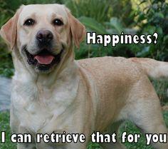 Like if you ♥ the #labrador retriever #dog