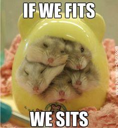 Funny Hamster Memes