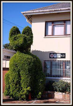 A beautiful sculpture with a cat's shape in front of a veterinary clinic in Camps Bay (Cape Town). Garden Show, Garden Art, Garden Design, Garden Ideas, Camps Bay Cape Town, Giant Cat, Topiary Garden, The Pussycat, Clinic Design