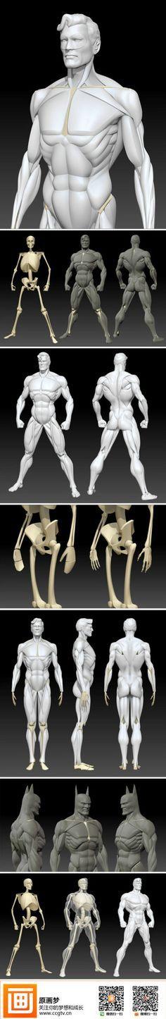@慕容狗剩菇凉采集到肌肉 人体(1206图)_花瓣人文艺术