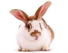 Cómo se comporta mi conejo según la edad que tenga