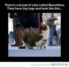 cat, funni