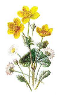 botanical art flower image